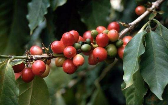 Кстати если кто не знал, вот так выглядит кофе которые мы пьем по утрам.