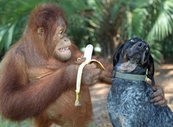 Умение уговаривать это исскуство. Иногда просто наличие банана недостаточно.