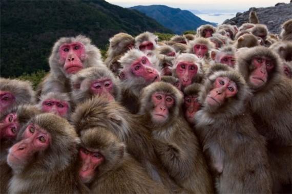 Первая группа дрогнувших в ожидании новой и легкой банановой жизни.