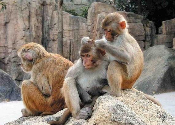 Развод островитян начался с того момента когда за каждую особь обезьянного мира было предложено 15 баксов.